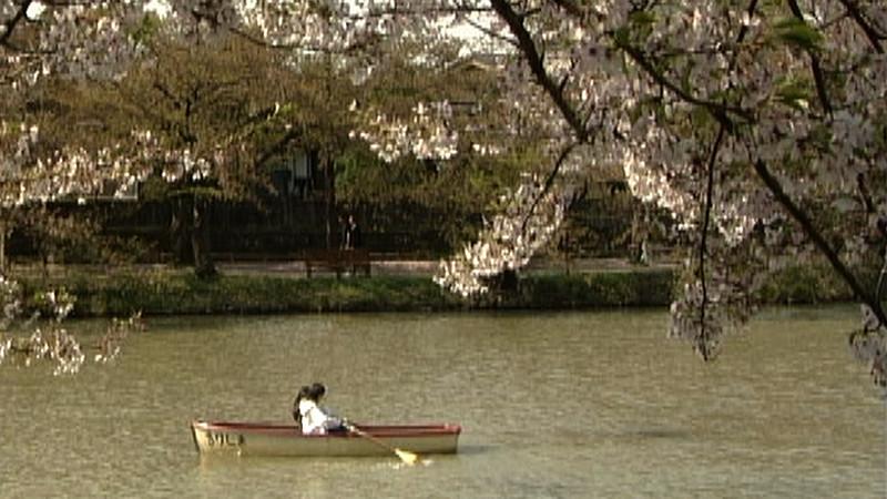 北の桜 KITA NO SAKURA