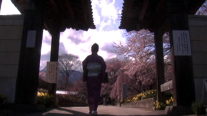 桜化身 三大桜を詠む