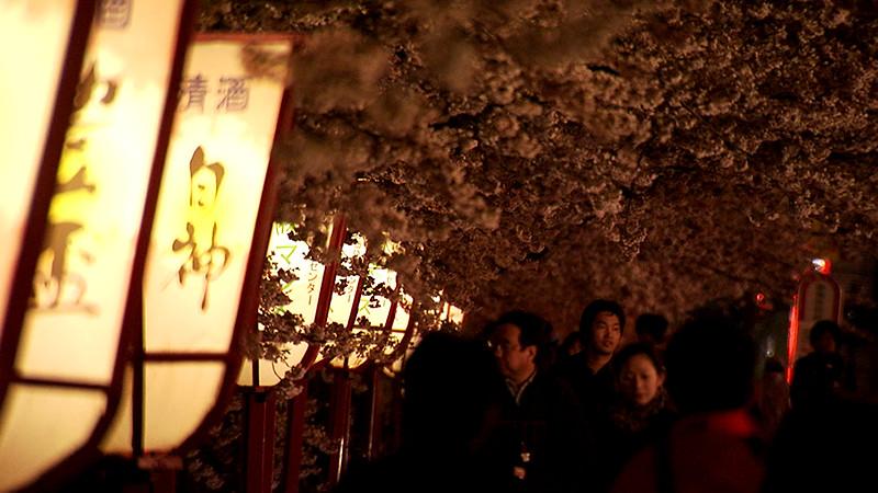 異境にて、桜を詠う ~詩人・田原 東北の旅~